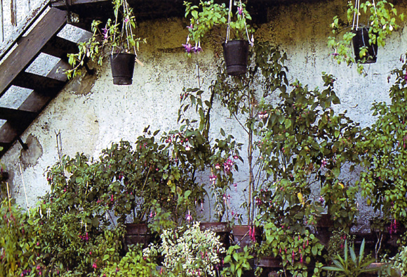 ¿Qué cosas debes tener en cuenta antes de elegir tus plantas?