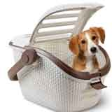Divertidos accesorios para mascotas