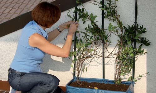 Consejos para cultivar tu propio huerto en casa