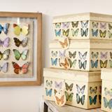 Deja que las mariposas revoloteen en tu hogar