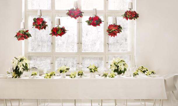 Esta Navidad, móntate en casa un jardín colgante de poinsettias