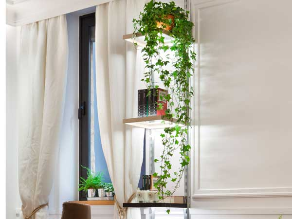 Decorar tu casa con plantas for Ver como decorar una casa