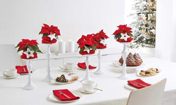 Decorar La Navidad Con Plantas Y Flores - Centros-de-mesa-con-plantas-naturales