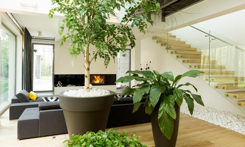 Consejos de experto para que tus plantas estén perfectas tras las ...