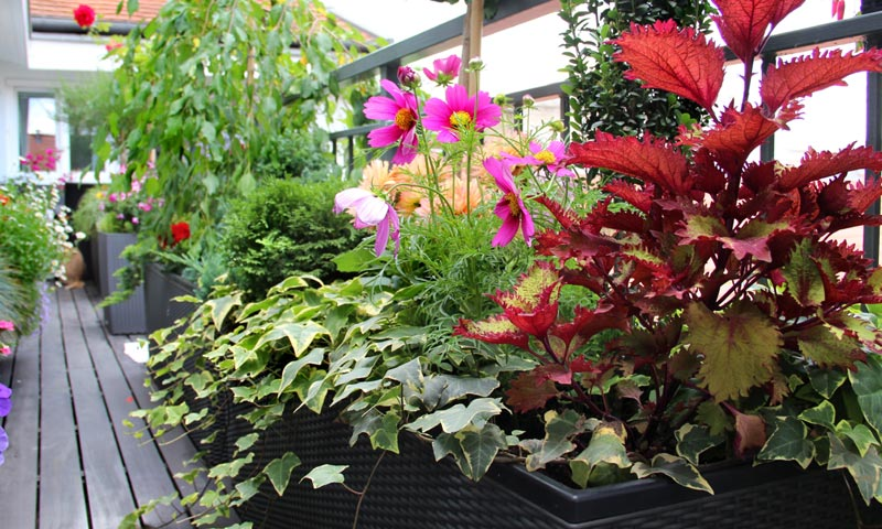 consejos de experto para que tus plantas est n perfectas tras las vacaciones. Black Bedroom Furniture Sets. Home Design Ideas