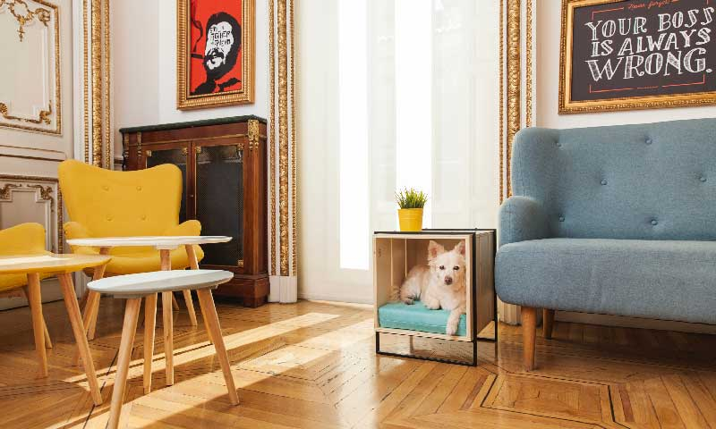 Atención mascotas!: Estos muebles son para vosotros... ¿O no? - Foto