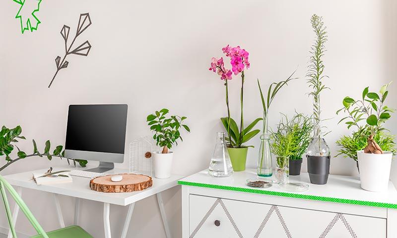 Plantas Que Limpian El Aire De Tu Casa - Decoracion-plantas