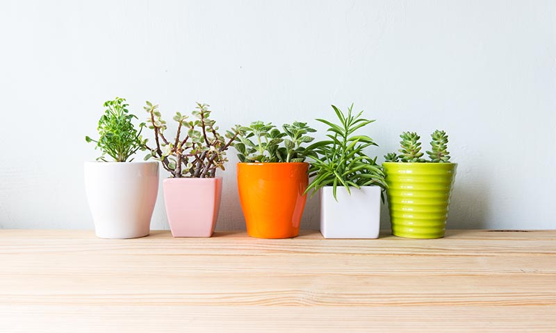 6 plantas para espacios con poca luz foto - Plantas de interior que no necesitan luz ...