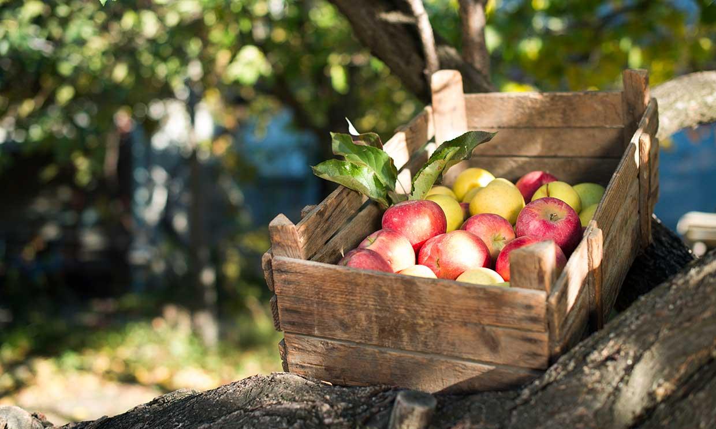 Construye un carrito de madera a medida para las frutas y verduras ¡con tus propias manos!