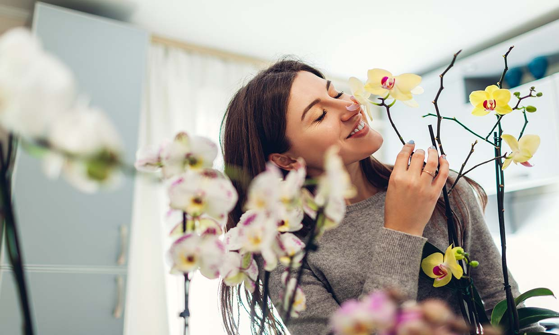 Descubre las plantas de interior con flores ideales para esta época