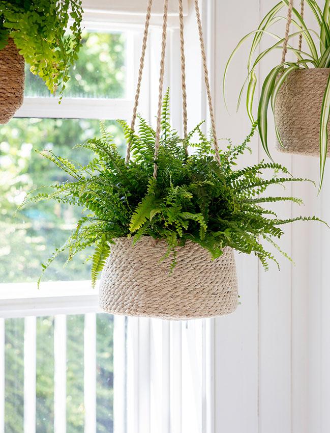 Trucos Y Cuidados Para Que Tus Plantas De Interior Duren Más Tiempo Foto 1