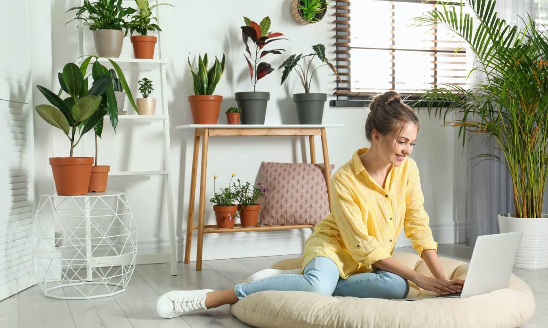 Plantas de interior, muy decorativas, que purifican el aire de tu casa -  Foto 1