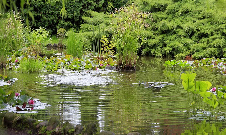 ¿Te animas a crear un jardín de lluvia?