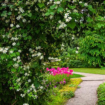 Plantas De Exterior 10 Trepadoras Con Flor Ideales Para Tu Jardín Foto 1