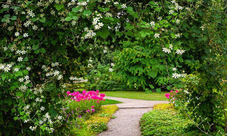 10 plantas trepadoras con flor para tu jardín que te van a cautivar