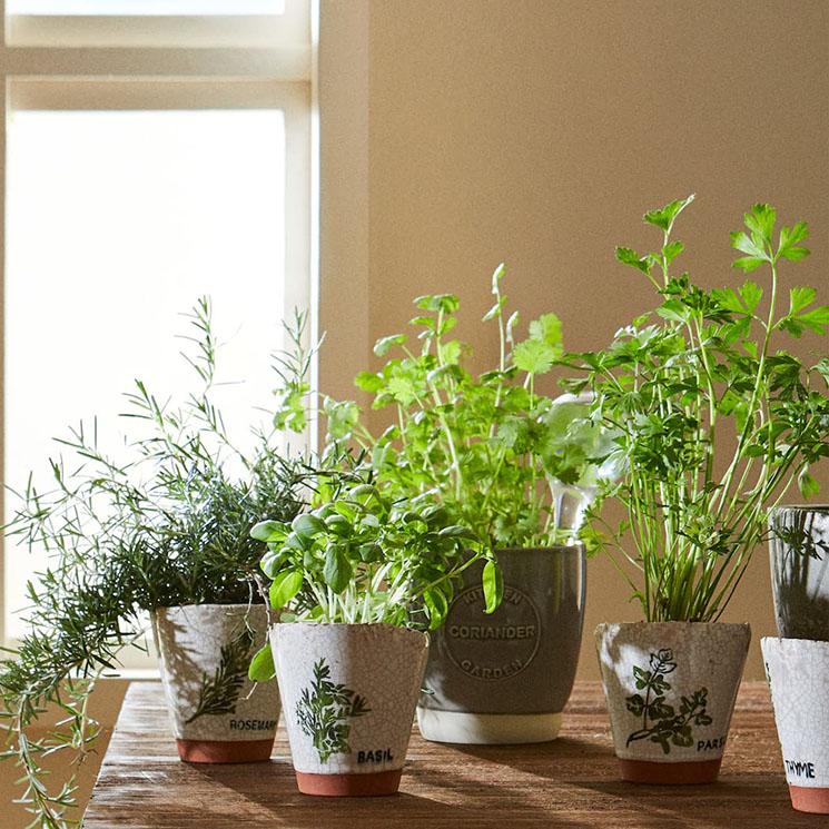 Plantas Las Mejores Hierbas Aromáticas Para Cultivar En Verano Foto 1