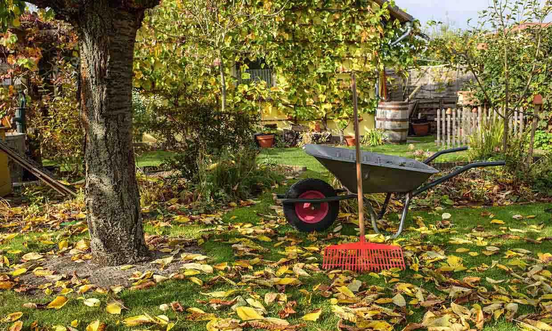 Descubre todos los cuidados que debes darle a tu jardín en otoño