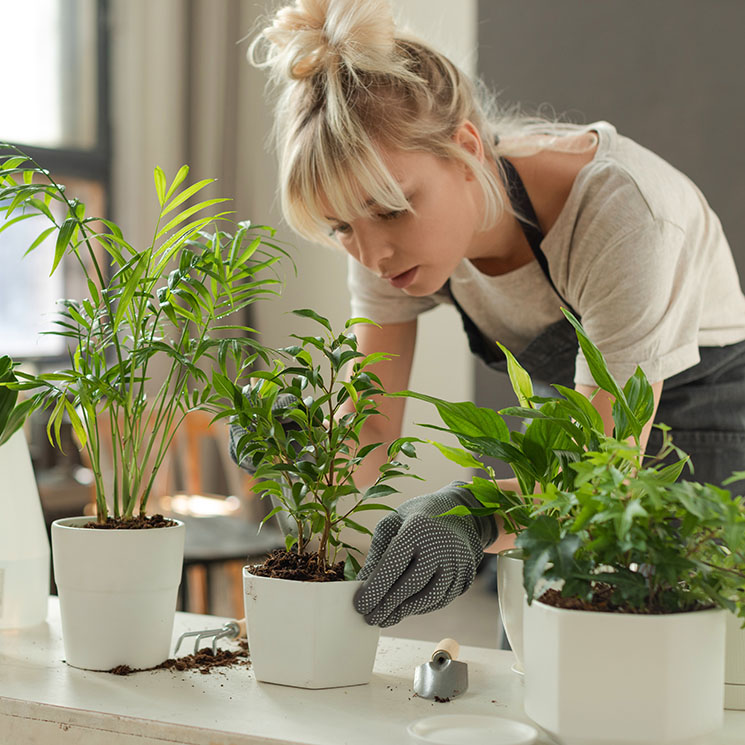 Consejos Para Trasplantar Tus Plantas De Interior Y De Exterior Foto 1