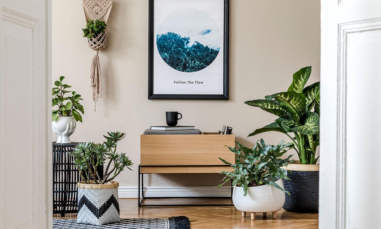 Las mejores ideas DIY para exponer tus plantas de interior