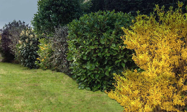 10 arbustos perfectos para plantar en tu jardín en invierno