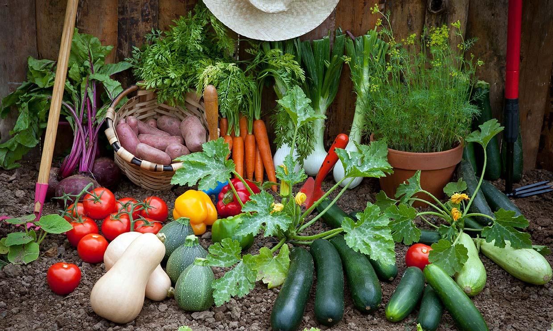 Huerto en casa: 10 hortalizas que puedes sembrar en primavera