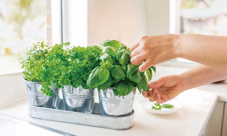 10 plantas que perfumarán tu casa y puedes cultivar en interior
