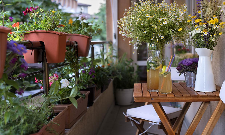 10 plantas antimosquitos que puedes cultivar dentro y fuera de casa