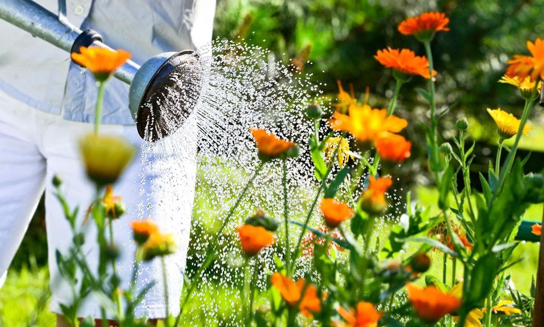 Cómo solucionar el exceso de riego en el jardín. ¡Salva tus plantas!