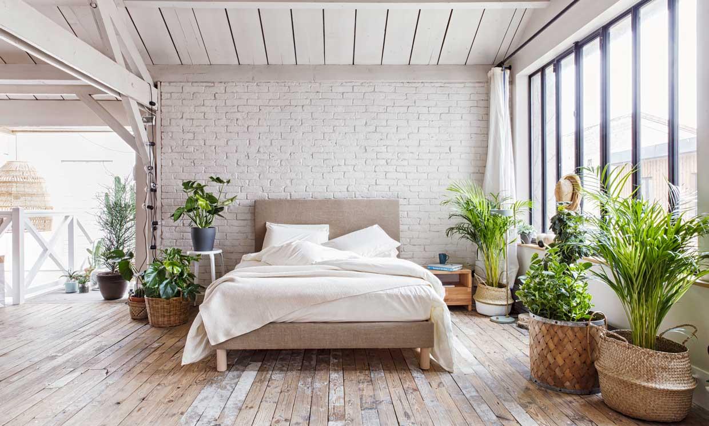 Cómo hacer tu casa más 'verde' por fuera… ¡Y por dentro!
