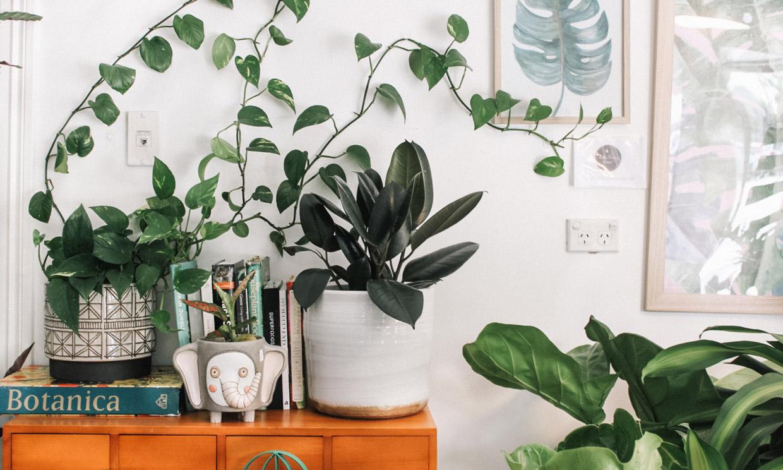 Las plantas trepadoras que mejor se adaptan a las estancias de tu casa