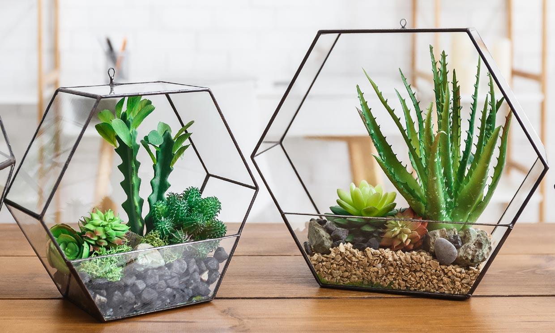 Terrarios de plantas, ese toque verde que necesita tu casa