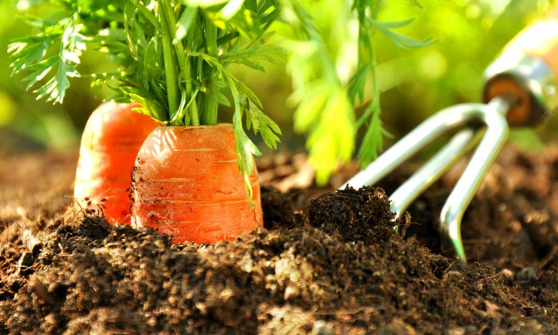¿Qué cultivar en el huerto en otoño?