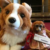 El Palacio de Buckingham devuelve juguete perdido a una niña que había pedido ayuda a la Reina Isabel