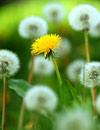 Se acerca la primavera: ¿será complicada para los alérgicos?