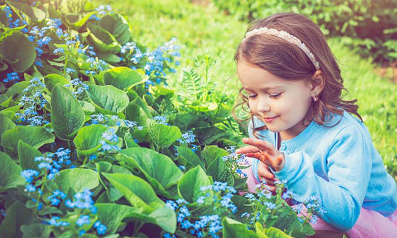 Alergia al polen: mitos y verdades
