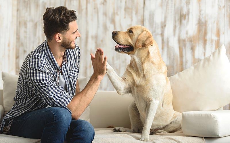 Enfermedades de las mascotas que se pueden transmitir a los humanos