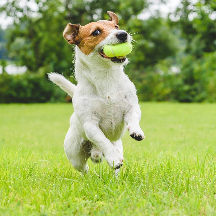 Cinco deportes que puedes hacer con tu perro - Foto 1