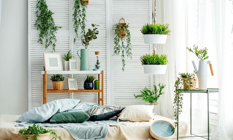 Las plantas que debes tener en tu hogar para atraer for El mejor arbol para plantar en casa