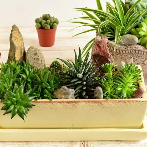 Las Plantas Que Debes Tener En Tu Hogar Para Atraer Energía