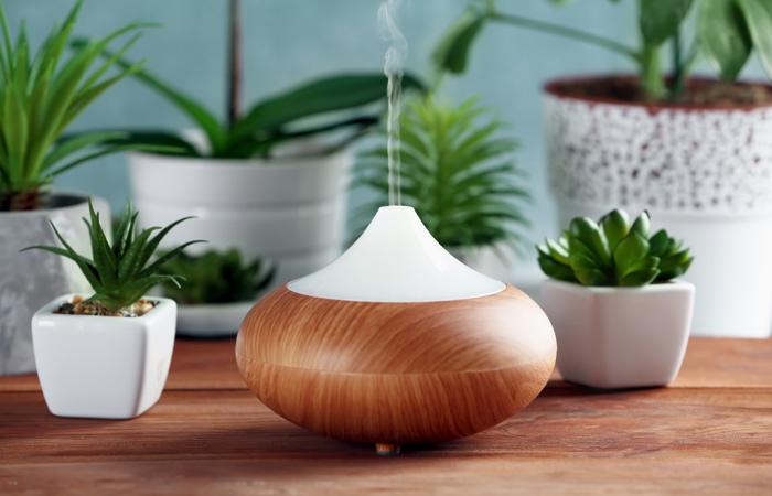 Las plantas que debes tener en tu hogar para atraer for Decoracion con plantas segun feng shui