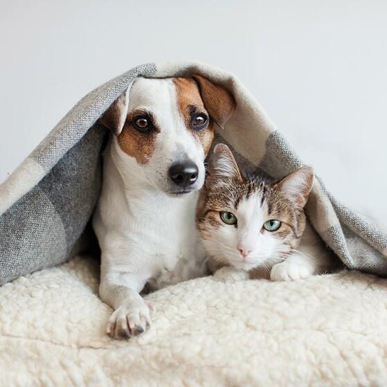 Pueden Convivir Los Perros Y Los Gatos