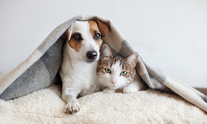 Pueden convivir los perros y los gatos?