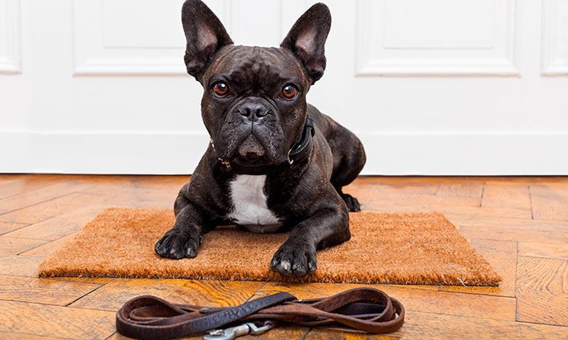 Técnicas de adiestramiento para corregir las malas conductas de tu perro (y sin castigos)