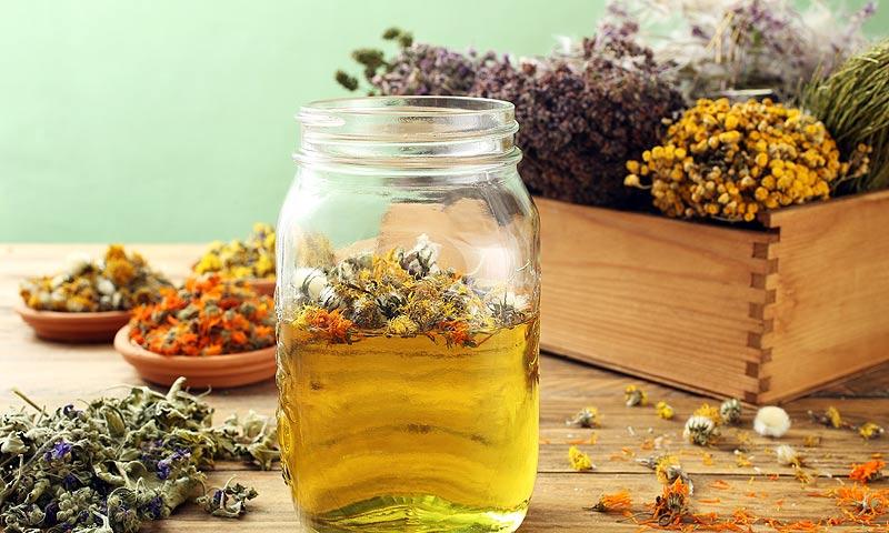 ¿Dolor de cabeza? Estas plantas medicinales te ayudarán