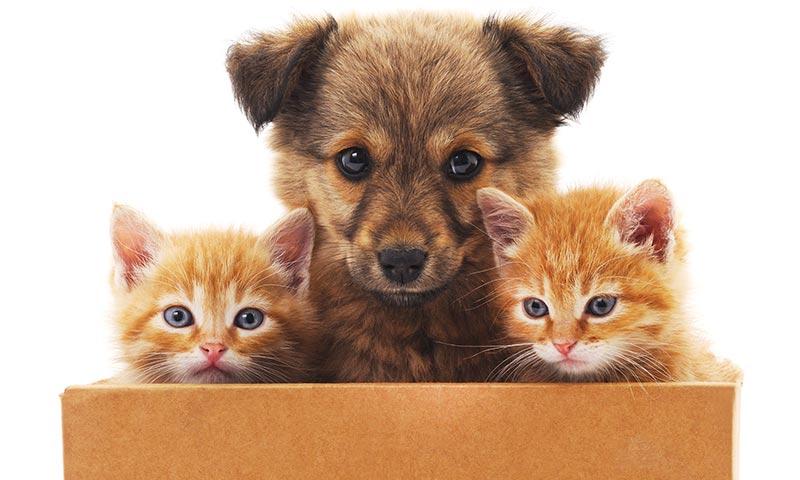 ¿Nuevo miembro en la familia? Consejos para los primeros días de tu cachorro en casa