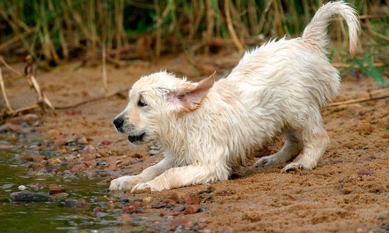 El inesperado rescate de un cachorro atrapado gracias al talento de un ingeniero indio