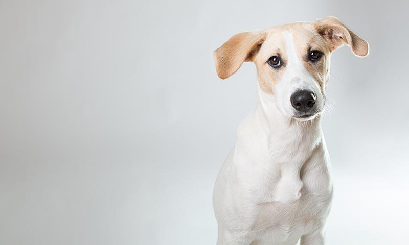 ¿Por qué adoptar un perro mestizo?