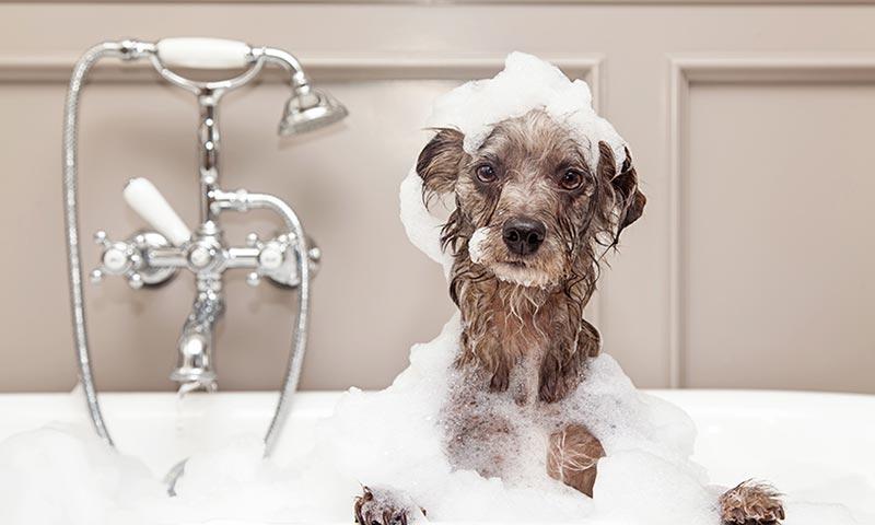 Si vas a adoptar un perro adopta un jubilado foto - Cada cuanto banar a un perro ...