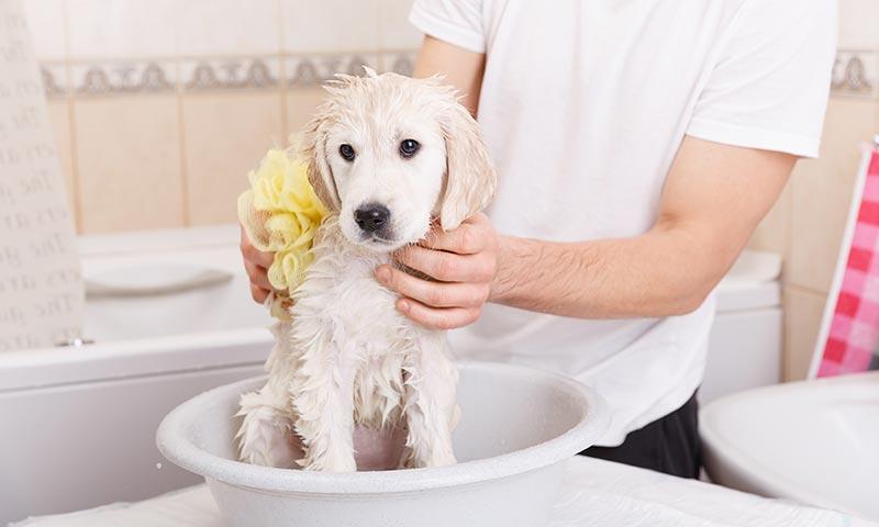 Cada cu nto tiempo se puede ba ar a un perro foto - Cada cuanto banar a un perro ...