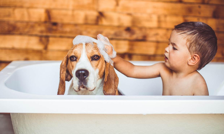 ¿Cada cuánto tiempo puedo bañar a mi perro?